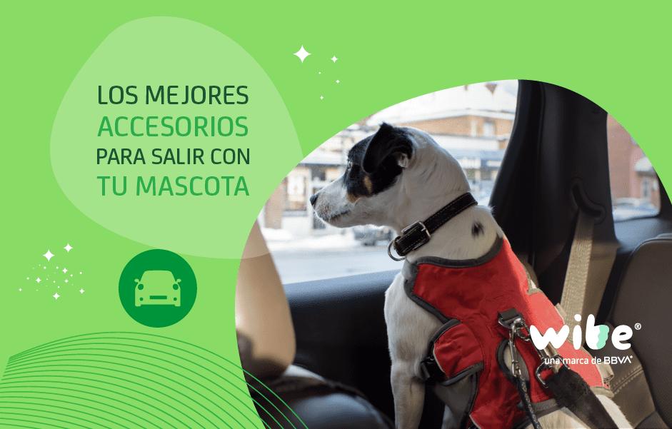 mejores accesorios para salir con tu mascota, accesorios para salir de paseo con las mascotas, accesorios indispensables para salir con un perro, accesorios mascotas auto