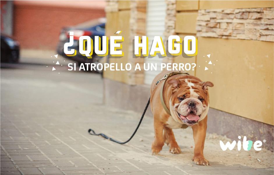 qué hago si atropello a un perro, ¿el seguro cubre el atropello de un perro?, ¿qué debo hacer si atropello a una mascota?