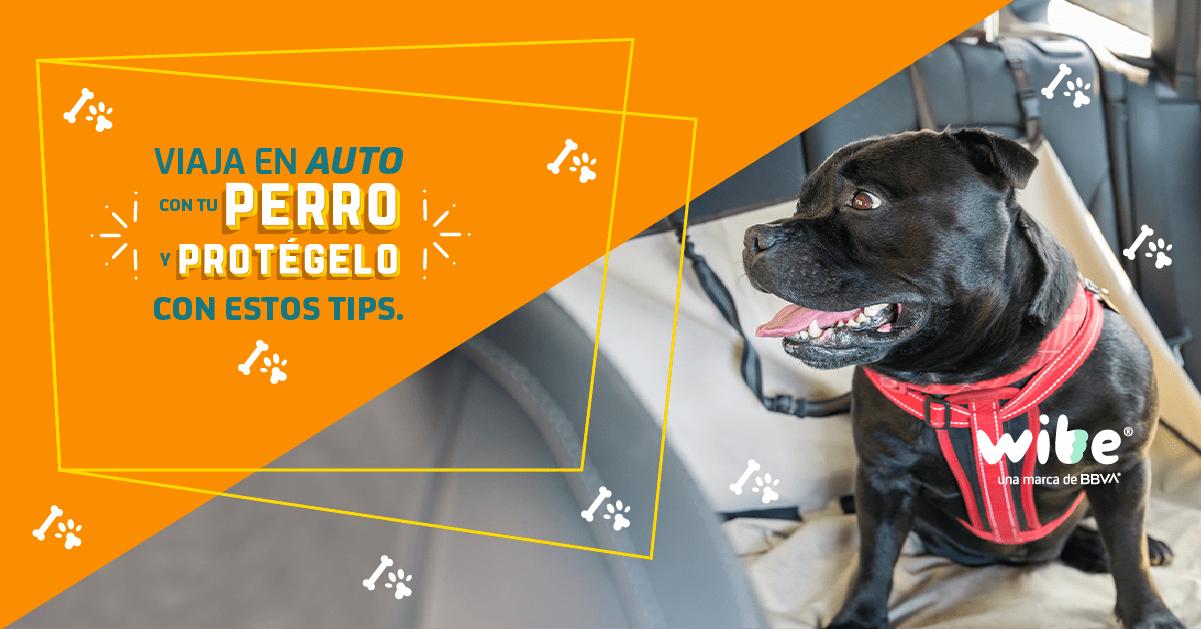tips de seguridad para viajar con tu perro en coche, consejos para viajar seguro con tu perro en el auto, viajar por carretera con tu perro, cómo llevar a tu mascota segura en auto, consejos para viajar con tu perro en coche